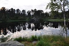 Mały staw na górze Fløyen | Small pond on Mt. Fløyen