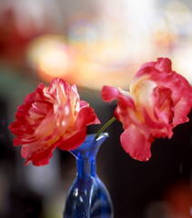 Contarex Sonnar 85/2 test roses (Bruce_of_Oz) Tags: rose zeiss bokeh cyclops adobe vase bullseye epson ikon fujichrome lightroom velvia50 sonnar contarex v700 852