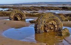 Stuck fast (Macca6691) Tags: sea seagulls seascape beach landscape seaside seagull wheels northsea seafront fishingboats northyorkshire filey fishingvessels fileybrigg inshorefishing fileybay