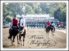 Going to the Gate (EASY GOER) Tags: summer vacation horses horse ny newyork tourism sports beauty race canon fun athletics track saratoga competition upstate running racing course event 5d ponies athletes tradition races sporting spa thoroughbred equine exciting thoroughbreds compete markiii
