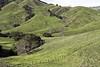 California Hillside (Joe Josephs: 2,861,655 views - thank you) Tags: california californialandscape joejosephs landscapes travel travelphotography animals californiacentralcoast californiacoast fineartphotography hiking hills hillside landscape landscapephotography landscapephotographylandscape outdoorphotography cows cattle farms farmland farming