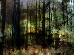 elfenbos ? (roberke) Tags: creation creative creatief digitalart photomontage photoshop layers lagen textures textuur wood woud trees bomen surreal outdoor denkbeeldig