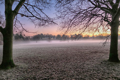 20161229_Start of a cold winter's day (Damien Walmsley) Tags: walk early trees weather frost knowle knowlepark grass fog mist sky colours