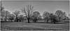 Dead Tree  Ickworth Park- (johnboy!) Tags: ickworthpark ickworthhouse ickworth deadtrees nationaltrust