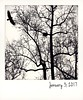 Turkey vulture & tulip tree. (jeanne.marie.) Tags: flying bird tulippoplar nest winter instant trees turkeyvulture silhouettes 365the2017edition 3652017 day3365 3jan17