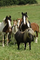 _le17040 (lotharlenz) Tags: horse pferd lotharlenz kalender poster herde pinto