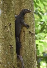 DSC_3133 (olyaterekhova) Tags: nature singapore bukit timah park animals