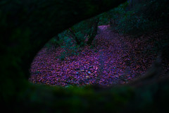 Pink (alejo.365shoots) Tags: pink wood forest path 365