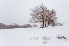 Nevada (Alfredo.Ruiz) Tags: canon eos6d ef1740 urbasa necada nevando invierno temporal