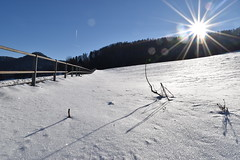 PHO_0143 (Dimi_M) Tags: neige soleil nature foret