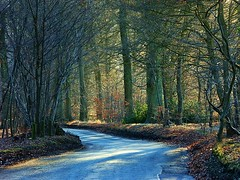 English country road (algo) Tags: road sunlight photography topf50 topv555 bravo shadows searchthebest gutentag quality topv1111 algo 1on1halloffame specland gtaggroup goddaym1