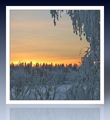 Sunset (Vaeltaja) Tags: trees winter light sunset snow yellow suomi finland evening fdsflickrtoys scenery february oulu lumi talvi maisema ilta valo auringonlasku puut keltainen kuivasjrvi helmikuu