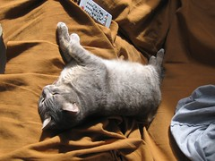 *'k now leave please, i need to rest* (Pounet) Tags: cat echo