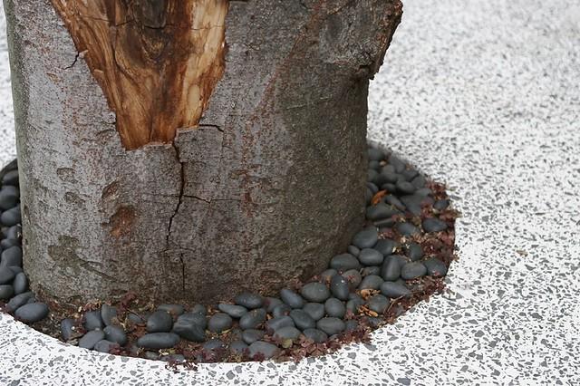 観賞用の樹木