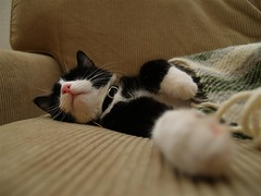 Sleeping cat (Dr. Hemmert) Tags: sleeping cats silly cute animals paw nap sweet indoor tuxedo tommyhj