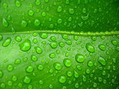 Yağmurun İzi