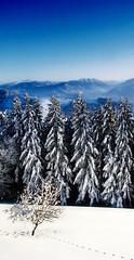 guards (Cilest) Tags: trees snow forest landscape austria sonntagberg utataview