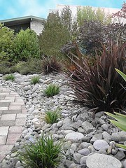 NZ Landscape Design. NZLANDSCAPES.COM. Garden Photos New Zealand. Dry River Garden. (nzlandscapes) Tags: new newzealand plants gardens river garden landscape design landscapes blog photos gardening designer landscaping grow style dry blogs auckland zealand planning commercial nz tips bonsai series advice growing agave plans ideas planner driveways planting gardener designers designing specialists landscaper specialist plantings landscapping landscapedesigner