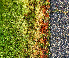This Side of the Highway (Sharon Mollerus) Tags: road grass highway asphalt 50v5f