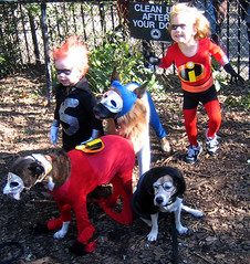 incredible_dogs (istolethetv) Tags: dog dogs halloween photo costume foto image snapshot picture halloweencostume photograph  incredibles  tompkinssquarepark dogsincostumes dogcostume halloweendogparade tompkinssquareparkdogparade dogsinhalloweencostumes dogsdressedupaspeople canetravestito caneincostume halloweencostumesfordogs