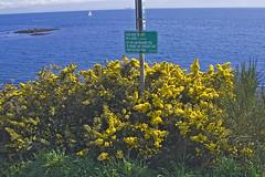 Near Sea Strait (monkeycurious) Tags: geocaching seastrait gcj7cq