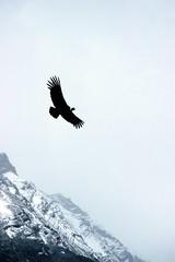 Condor V (Walter Quirtmair) Tags: 2005 november patagonia film southamerica argentina glacier condor coolscan peritomoreno swq takenbywalter eos300 parquenacionallosglaciares seriescondor trackperitomoreno canon35105