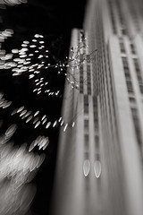 Dreaming of New York (Mark Interrante (aka pinhole)) Tags: nyc trees bw ny newyork blur night lensbaby wow tears dream rockefellercenter christmaslights card rockefeller nocturne lb2 blueplum expd