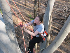 Climbing2 153 (kariwhite) Tags: tree bob climbing kari donnie ewen ellicottcity touchthesky