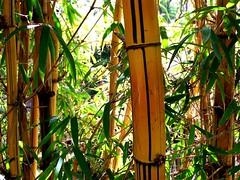 A Flora do Jardim Tropical 3 (LuPan59) Tags: flora kodak dx7590 lupan