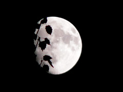 Silence / Silencio (victor_nuno) Tags: moon white black blanco ilovenature interestingness searchthebest negro 2006 luna explore thoughts silence simplicity book1 silencio pensamientos sencillez interestingness261 i500 abigfave victornuno vctornuo wwwvictornunocom