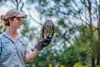 QBE Free-Flight Bird Show (Erinn Shirley) Tags: erinncshirley erinnshirley barkingowl tarongazoo australia travel sydney conservation bokeh fujixt2
