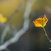 Golden leaf!
