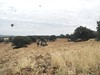 Spain Ibex Hunt & Driven Partridge Hunts 51