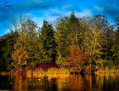 Dublin's lake (fereres.nathan) Tags: dublin ireland sky blue ciel green colour landscape paysage lake lac trees orange autumn automne leaf nature sunny day nikon d5500 hike balade photo lightroom