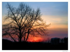 sunset, today (silviaON) Tags: blue winter sunset red black tree colors canon germany europe sonnenuntergang ixus february duisburg baum orton 2007 naturesfinest instantfave abigfave colorphotoaward impressedbeauty