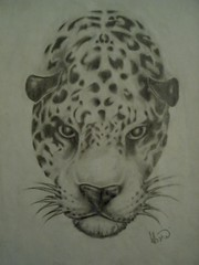 Panthera onca (L.Lukatsky) Tags: nature animals drawing pintada ona onca panthera pantheraonca