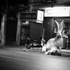 moto, trash and rabbit ?! - by pchweat