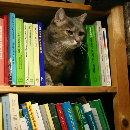 Shelf the cat I