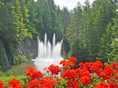Ross Fountain and geraniums, Butchart Gardens, B. C. (British Columbia) (Martin LaBar) Tags: flowers trees red canada flower tree water fountain beautiful gardens garden rojo britishcolumbia flor fuente spray lovely butchartgardens geraniums geranium quarry butchart bello geraniaceae rossfountain 2for2