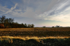 Late afternoon/early winter, rural Illinois (chalkdog) Tags: field southernillinois timeandspace existentialtriggersfortherapy dontmindmeimjustbeingmorbid enjoyillinois illinoistravel