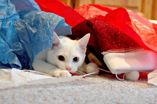 kucing putih yang cantik dan comel bermain bawah plastik