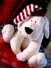 Alfred the Xmas bear (littlestar19) Tags: xmas christmas white toys teddy stripy plushie hat cute colourful bright bear alfred tinsel red