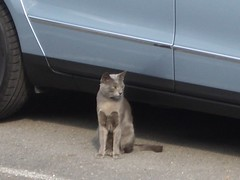 Cat by Volkswagen