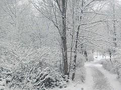 051226_5 (maxie-online) Tags: marzahn berlin whereilive snow