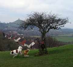 Glastonbury Thorn Tree (janet7r) Tags: glastonbury holythorntree tor landscape