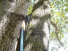 Rope Sleeves (J~Bird) Tags: treeclimbing rtc canopying recreational srt drt wtf