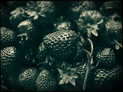 Strawberries (Jason Arber) Tags: jason arber photography photoshop strawberries