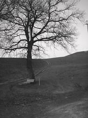 Solitudine (ciocci) Tags: alberi strada campagna colline asciano fotografinewitaliangeneration