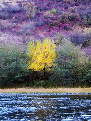Fall color on the Grand Ronde River (Belltown) Tags: color fall river washington i500 grandronde