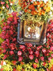 sinulog 2006 - smothered by flowers (adlaw) Tags: sinulog sinulog2006 procession stonino festival cebu cebucity philippines colors tradition culture religion faith catholic